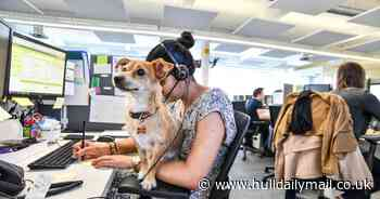Pets at Home launches drive to allow dogs into workplace with top tips for employers