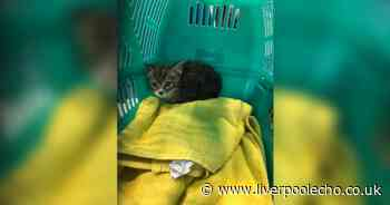 Kitten's ear cut off with Stanley knife in 'barbaric attack'