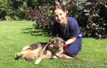 Croydon dog warden recognised with RSPCA award - In Your Area