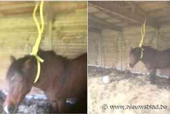 """Onbekende man bindt paard met tuinslang vast in stal: """"Ik begrijp hier helemaal niets van"""""""