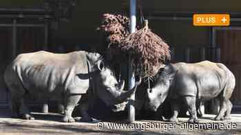 Tierbaby eingeschläfert: Wie geht es mit der Nashorn-Zucht im Zoo weiter?