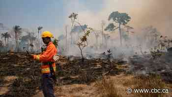 Deforestation of Amazon rainforest helps push greenhouse gases to record high
