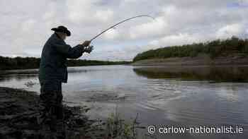 Fisheries agency seeking views on tagging system - Carlow Nationalist
