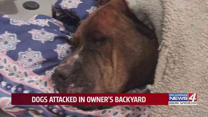 Dogs attacked in owner's Oklahoma City backyard; neighbor claims defense