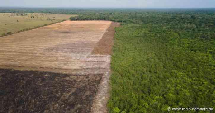 Brasilien verspricht Erhalt des Amazonasgebiets