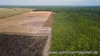 Illegale Amazonas-Abholzung: Brasilien will Ende bis 2028 verkünden