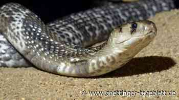 Mann lässt Doppelgänger mit Kobra töten, um 5 Millionen Dollar von Lebensversicherung zu kassieren
