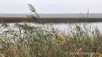 Crews work to control invasive plant taking over Tiny Marsh