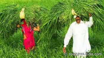 PM KISAN Scheme documents rules changed, know what to do for registration to reap Rs 6,000 yearly benefits