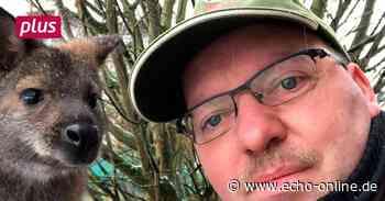 Kängurus genießen in Dautphetal die Sonne - Echo Online