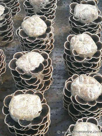 Nammex Achieves a Breakthrough in Mushroom Cultivation