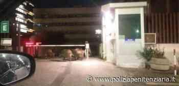 Roma: piccolo branco cinghiali tenta di entrare nel Tribunale della città. Respinti da Polizia Penitenziaria - Polizia Penitenziaria