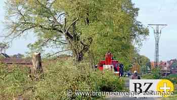 Ärger über Fällung der alten Akazien-Allee in Heiligendorf